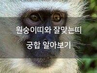 원숭이띠와잘맞는띠 궁합 알아보기