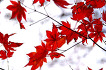 가을... 내장산 그리고 강천산
