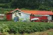 무농약 양평블루베리농장 수확체험