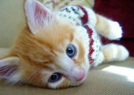 세상에서 제일 예쁜 아기고양이 사진