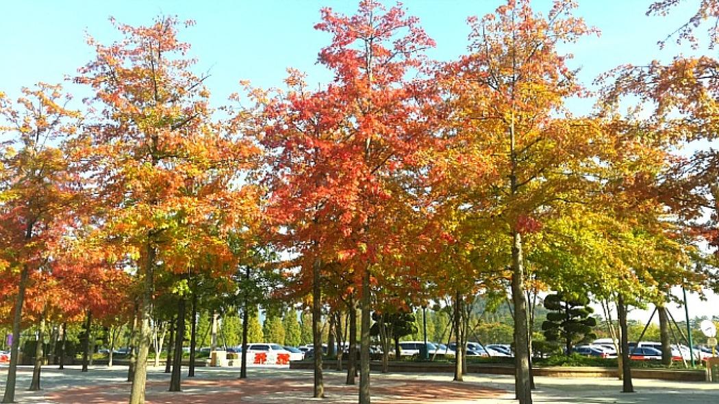 우정은 가을 속 캐리비안 베이를 타고!