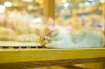 단잠 자는 고양이