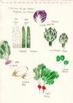 에피소드 25 - 프랑스에서 볼 수 있는 채소들.