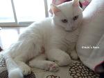 집주인 자리를 차지한 고양이의 자세