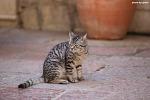 몬테네그로 코토르 올드타운에서 만난 고양이