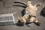 바닥을 구르는 길 고양이, 일본 기후현 구조하치만