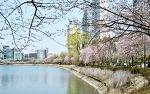 석촌호수 벚꽃축제, 대표적인 4월 서울축제 일정확인