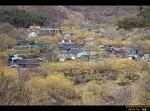 구례 산동, 계척, 현천마을의 산수유