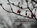 2016년 겨울식재료 정리1탄( 초겨울편, 12월)