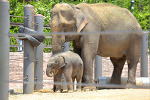 서울 어린이대공원 동물원 아기 코끼리, 동물들