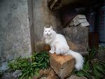 거리의 고양이 12/Cats in the street 12