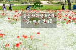 울산 태화강대공원, 끝없이 펼쳐지는 아름다운 꽃들의 축제