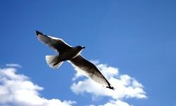 알바트로스(Albatros)에 대한 단상-15년전(1994년) 동아리 소식지에 기고한 글