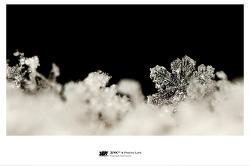 [접사] 雪...