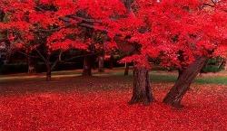 붉은 단풍잎 밟으며 - 는개 김잔디.