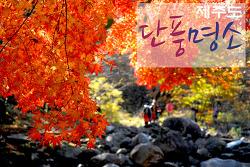 가을 정취 속, 걷기 좋은 제주도 단풍명소 7선