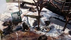[일본 여행기 no.5] 노보리베츠 곰 목장을 거닐다.