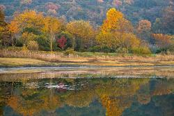 용동못의 가을