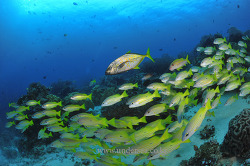 Raja Ampat dive with Raja Ampat Expolore,
