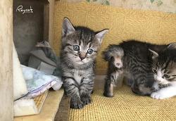 아파트 길고양이가 낳은 귀여운 아기 고양이들