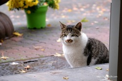 [길고양이 이야기]귀여운 동네 깡패 코반이