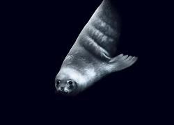 로스해: 최후의 바다