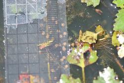 금개구리가 평사리에 알을 낳았다.