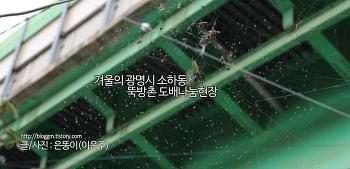 겨울의 광명시 소하동 뚝방촌 도배 나눔 현장