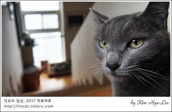 [적묘의 고양이]노묘들에게 간식을 주는 이유, 늙어서 즐거움이란(feat,츄르)