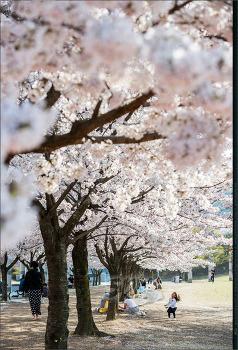 또다시.. 봄 - (2)