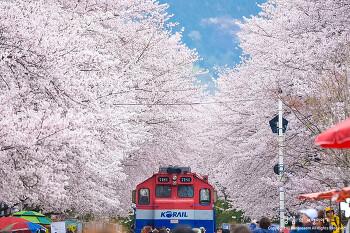 진해 경화역 벚꽃터널, 기차를 만나지 못해 아쉬웠지만,,,