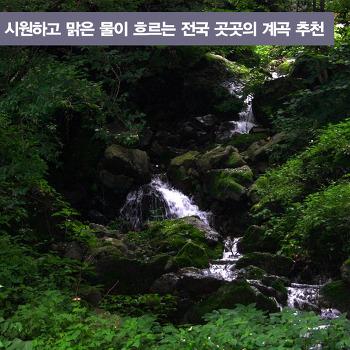 시원하고 맑은 물이 흐르는 전국 곳곳의 계곡 추천