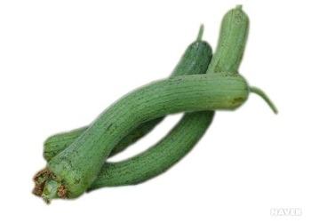 기침멈추는방법 : 기관지에 좋은 음식 수세미먹기- 수세미효능