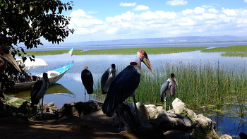AWASA, ETHIOPIA (아와사, 에티오피아)