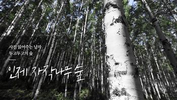 [사진 읽어주는 남자] 두고 두고의 숲 <인제 자작나무 숲>