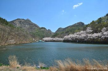 [진안여행] 벚꽃엔딩에 가장 좋은 여행지, 진안 마이산 벚꽃
