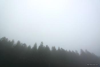 태풍 속의 사려니숲길
