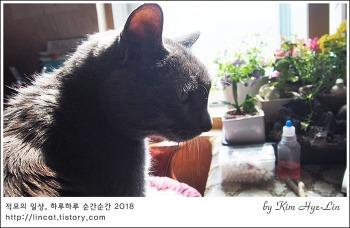 [적묘의 고양이]흔한 봄날, 은퇴모임 현장 르포, 묘르신 3종세트