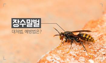 [안전꿀팁] 추석맞이 성묘, 벌초 때 장수말벌 대처법 및 예방법!