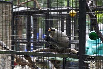 17년 8월 - 중국 - 홍콩 - 동물원 및 식물원 ( Hong Kong Zoological And Botanical Gardens , 香港動植物公園 )