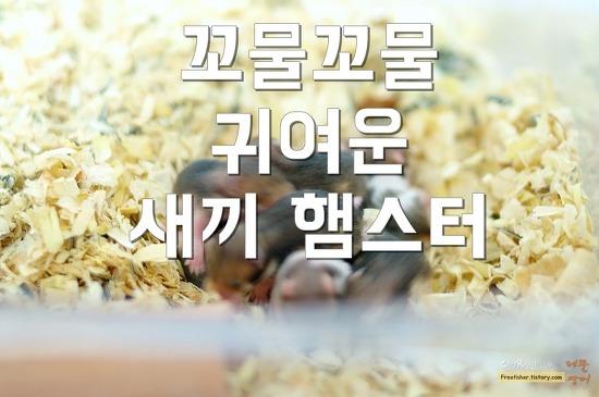 꼬물꼬물 귀여운 아기 햄스터