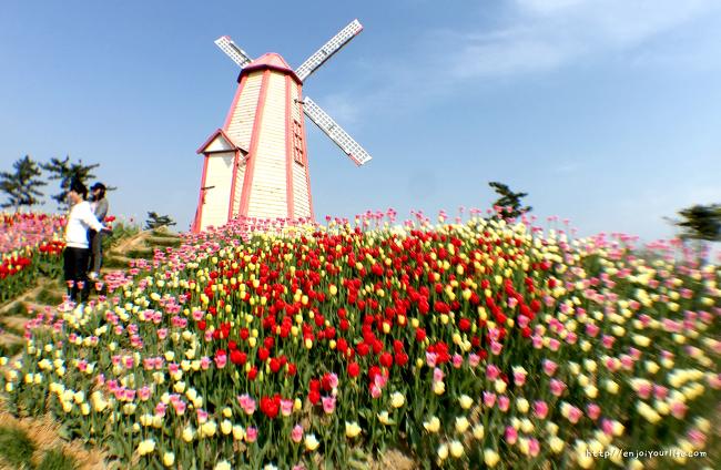 봄의 끝자락, 놓치기 아까운 봄꽃 축제 '태안 세계 튤립 꽃축제'