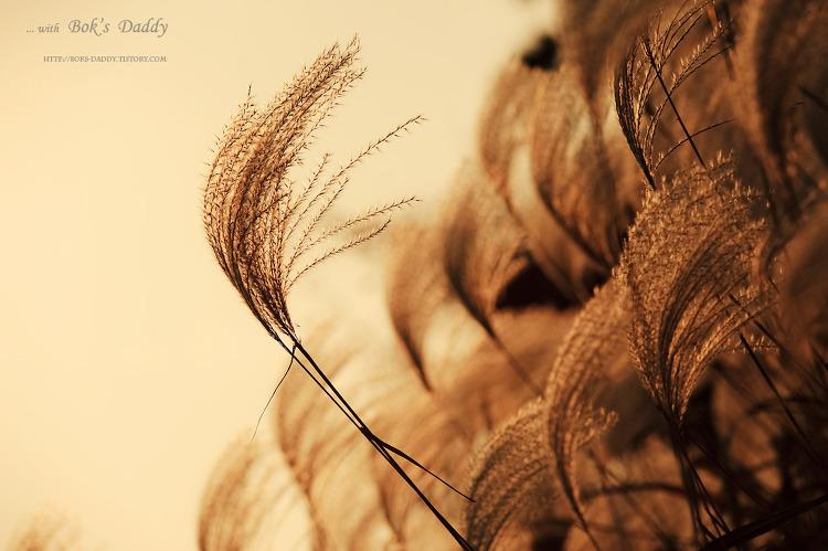 지나가는 가을을 느끼며... (다중촬영)
