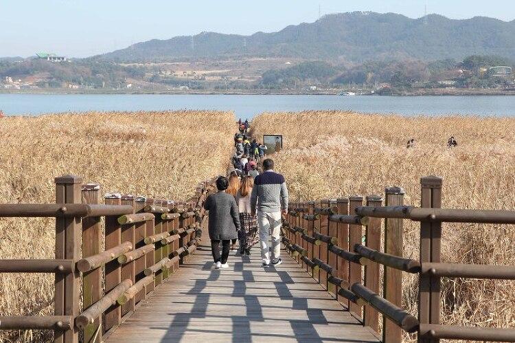 [충남 서천]몸도 마음도 가뿐한 가을여행의 백미 '신성리갈대밭'