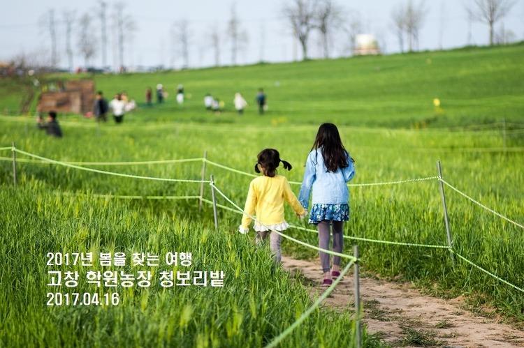 [군산-고창 여행] 첫 눈에 반한 고창 학원농장 청보리밭