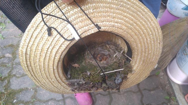 자연의 신비, 밀짚 모자에 새가 알을 낳았어요