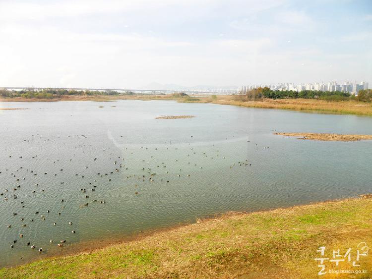 철새들의 낙원! 낙동강하구 에코센터