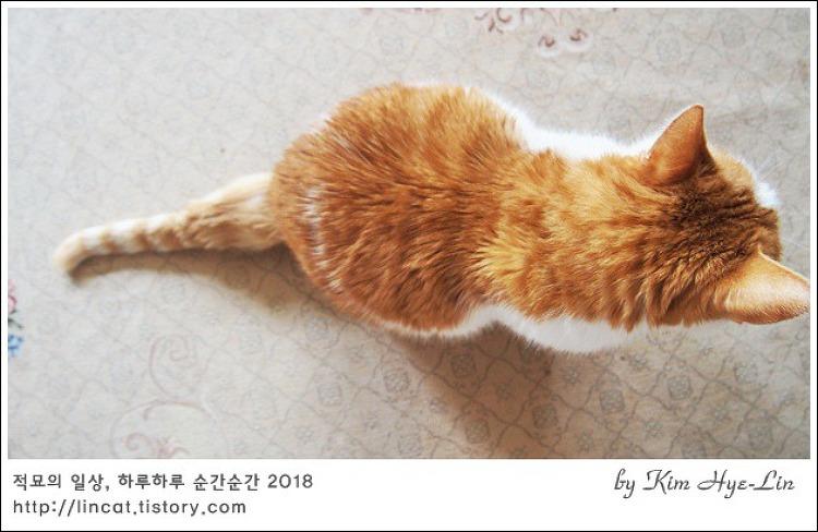 [적묘의 고양이]19살 묘르신의 취미,묘생의 절반은 그루밍(+동영상)