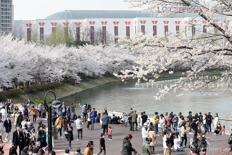 2018 잠실 석촌호수 벚꽃축제, 벚꽃