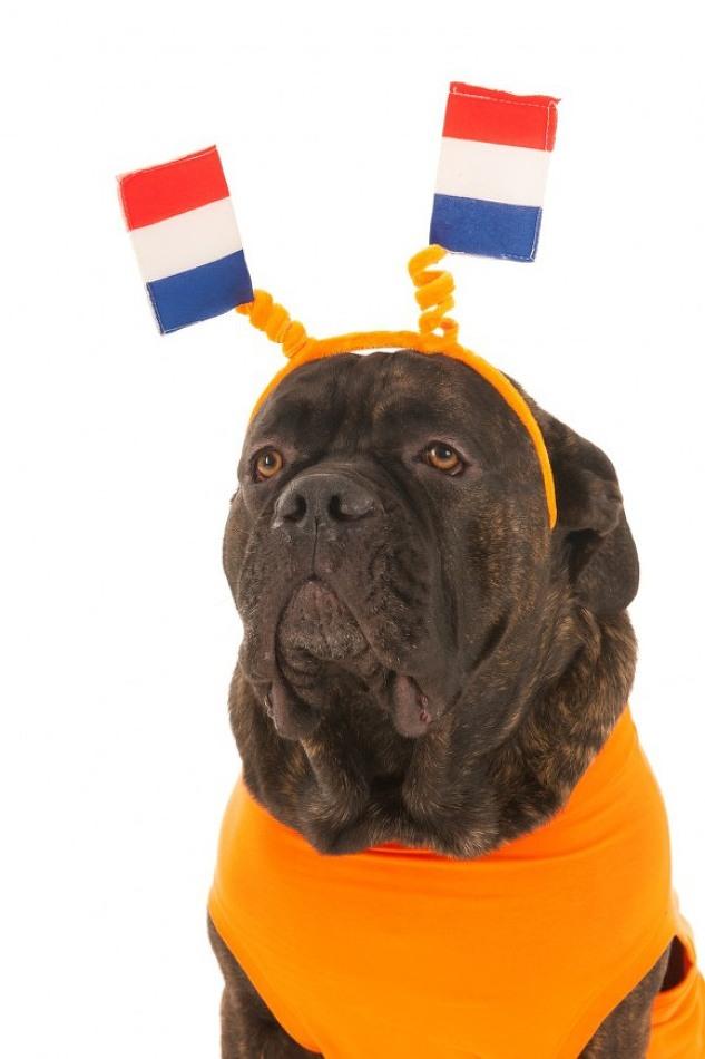 [윤리적소비 사례]네덜란드에는 동물을 위한 정당이..